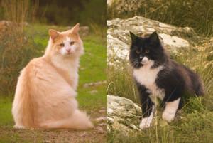 Los gatos de El Balcó de Miravet